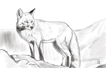 Fox_Sketch